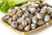 Fresh clams — Stockfoto