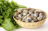 Clams with salad bunch — Stock Photo
