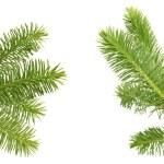 Pine branches — Stock Photo #44878737