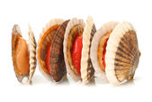 Raw scallops — Stock Photo