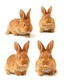 Babies of rabbit — Stock Photo