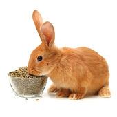 Rabbit near plate of food — 图库照片