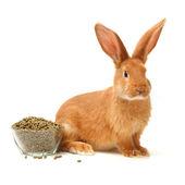 Rabbit near plate of food — Stock Photo