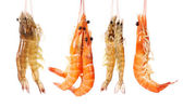 Shrimps heap — Stock Photo