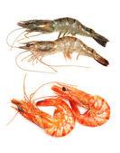 Four shrimps — Stock Photo