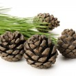 Pine cones and branch — Stock Photo