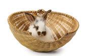 Rabbit in basket — Stock Photo