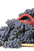 Basket of ripe grapes — Stock Photo