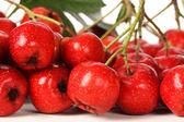 Hawthorn berries — Stock Photo