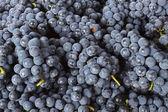 Ripe Grapes — Stock Photo