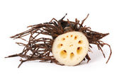 Piece of Lotus root — Stock Photo