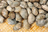 Group of clams — Stock Photo