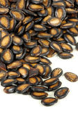 Black Melon Seeds — Stock Photo