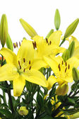 Lilies bouquet — Stockfoto