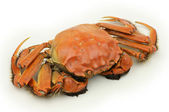 Orange krabba — Stockfoto