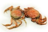 Kokta krabbor — Stockfoto