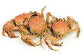 Crabs heap — Foto de Stock