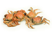 Crabs heap — Stockfoto