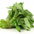 Water spinach bunch — Stock Photo