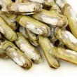 Razor clams heap — Stock Photo