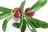 Arbutus with leaves — Stok fotoğraf