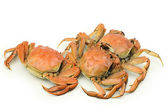 Gekochte krabben — Stockfoto