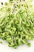 Black bean sprouts heap — Stock Photo