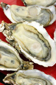 Alive oysters — Stock Photo