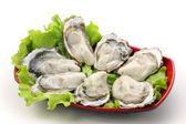 Raw opened oysters — Stock Photo