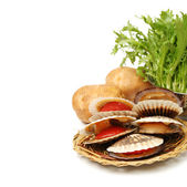 Raw scallops with salad — Stock Photo