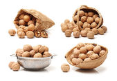 Walnuts in various dishware — Stock Photo