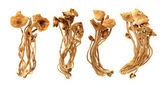 Willow mushrooms — Stock Photo
