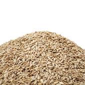 очищенные семена подсолнечника — Стоковое фото