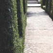A stone walkway surrounded by bobbed bushes boxwood - Stock Photo