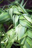 Thickets of green sedge on the meadow — Stock Photo