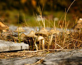 Fungi at Eidsborg — Stock Photo
