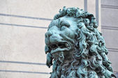 Majestic lion — Stock Photo