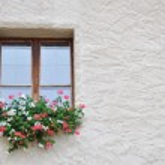 Window and flowers — Stock Photo #14726993