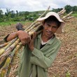 Sugarcane Worker — Stock Photo
