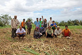 Sugar Cane Field Workers — Stock Photo