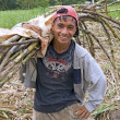 Stock Photo: sugarcane worker