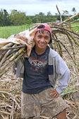 Sugarcane Worker — Stock Photo