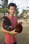 Filipiński chłopiec, trzymając jego kogut walki — Zdjęcie stockowe