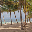 Alona Beach Coconut Trees — Stock Photo #20231585