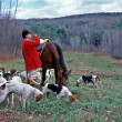 Stock Photo: Fox Hunt Master and Hounds