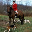 fox hunting — Stock Photo