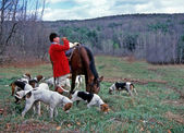 Fox Hunt Master and Hounds — Stock Photo