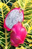 Red Dragon Fruit or Pitaya — Stock Photo
