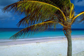 Pink Beach Bonaire Caribbean — Stock Photo