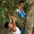 Philippines - Boys Climbing Tree — Stock Photo